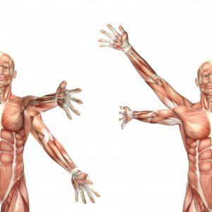 anatomia-2.jpg